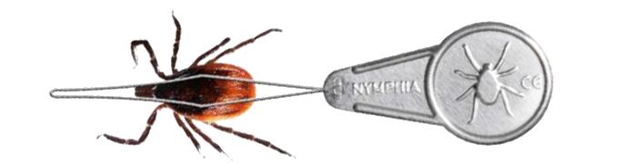 Нимфия за премахване на кърлежи